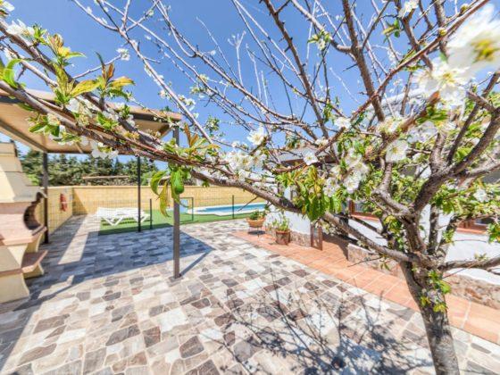 Cortijo Río Salado - Árbol florecido - Apartamentos Patio Andaluz - Playa de La Fontanilla (Conil)