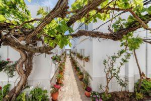 Parra en el Patio - Apartamentos Patio Andaluz - Playa de La Fontanilla (Conil)