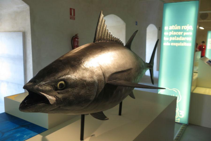 Museo del Atún - Apartamentos Patio Andaluz - Playa de La Fontanilla (Conil)