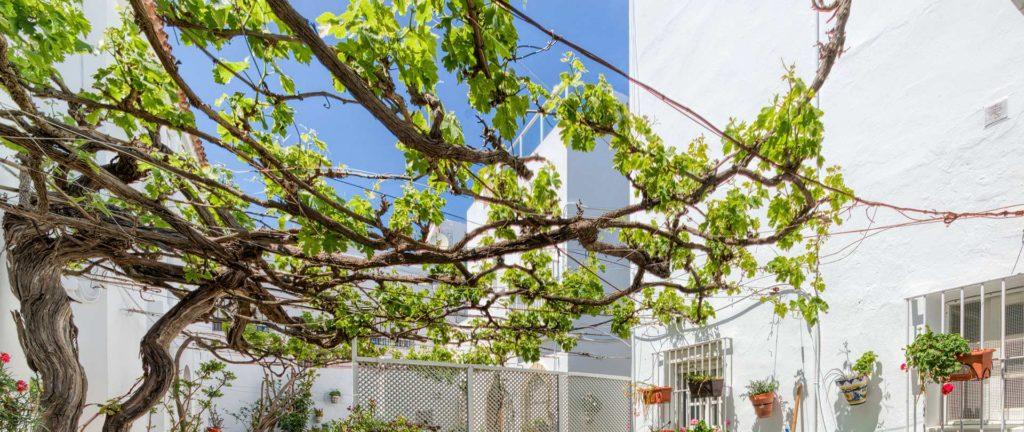Parra - Apartamentos Patio Andaluz - Playa de La Fontanilla (Conil)